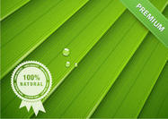 Green-leaf-texture-psd