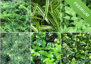 Grass-and-leaves-textures-pack