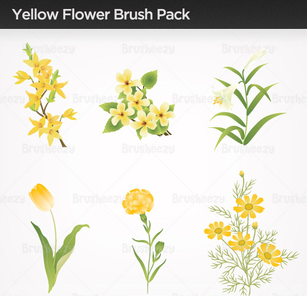 Yellow-flower-brushes