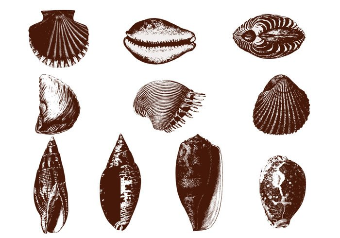 Etched Shell Brushes Pack