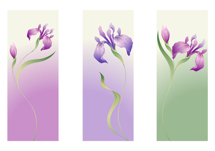 iris flower banner pack  free photoshop brushes at brusheezy, Natural flower
