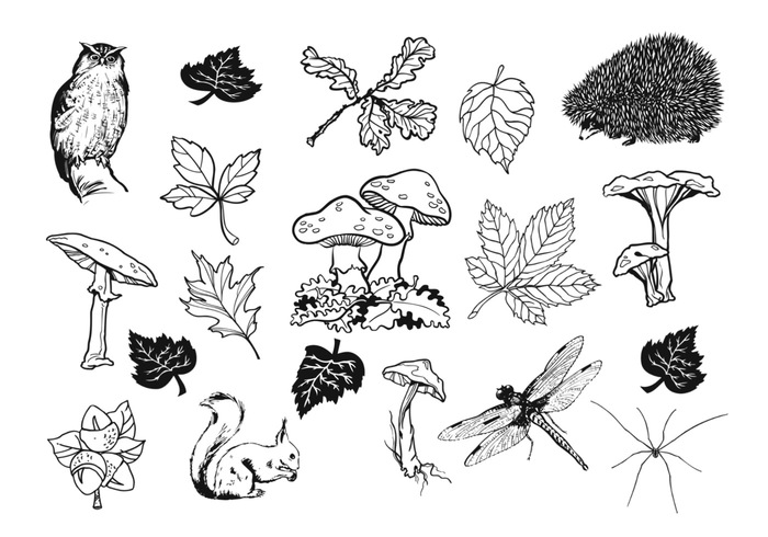 Hand Drawn Natural Fall Brushes Pack