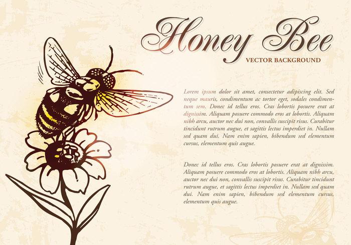 Honey Bee Background PSD