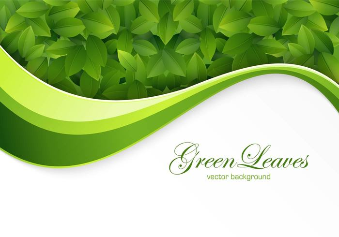 Green Leaves Background PSD