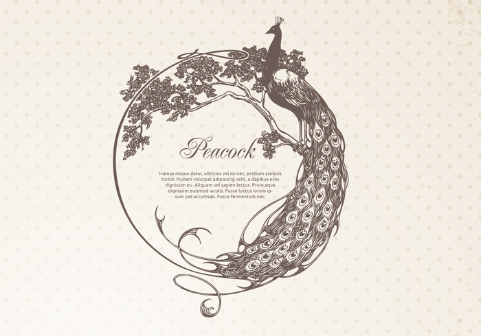 Hand Drawn Peacock Frame Banner PSD