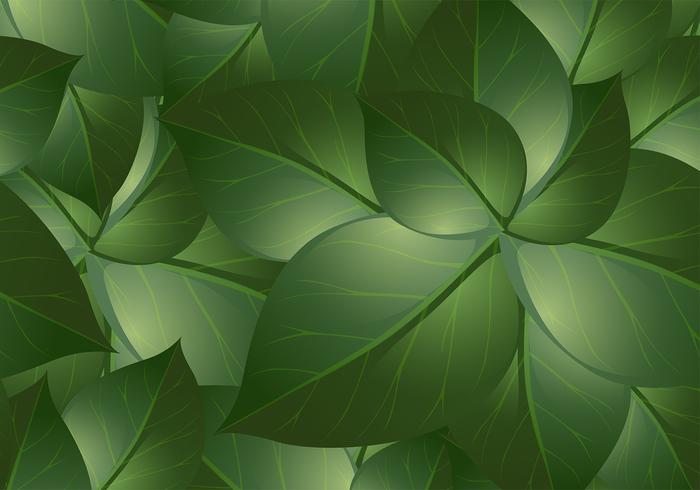 Groene Blad Achtergronden