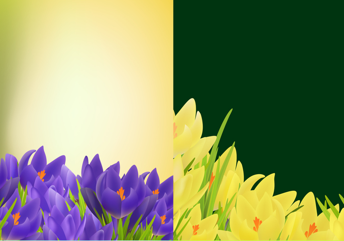 Tulip Background PSD Pack