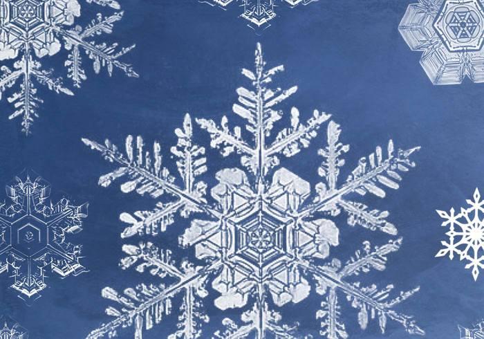 Cepillos de copo de nieve