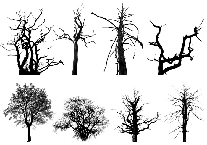 how to draw a realistic dead tree