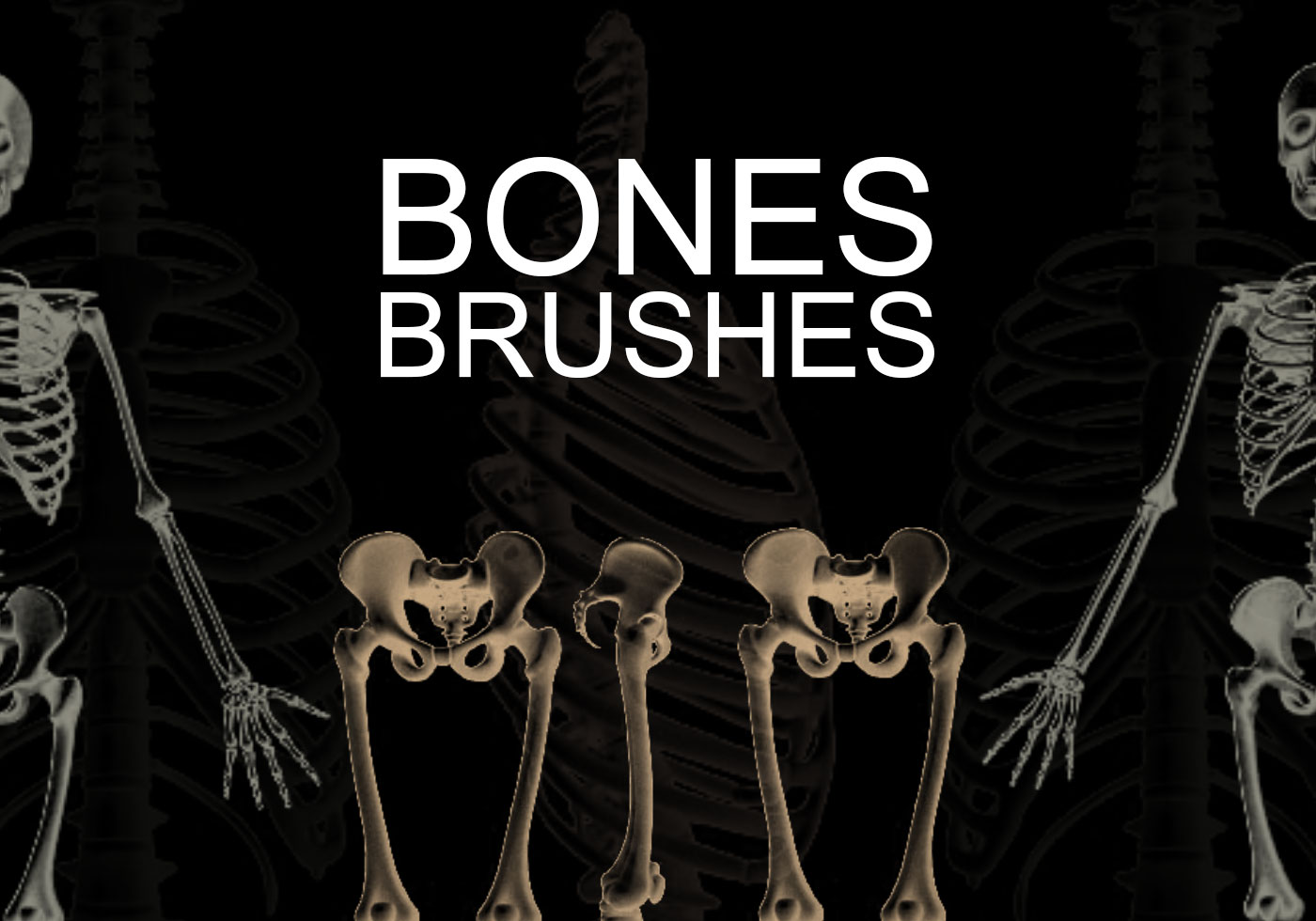 Bones-photoshop-brushes