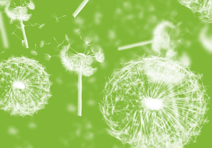Dandelions Photoshop Brushes
