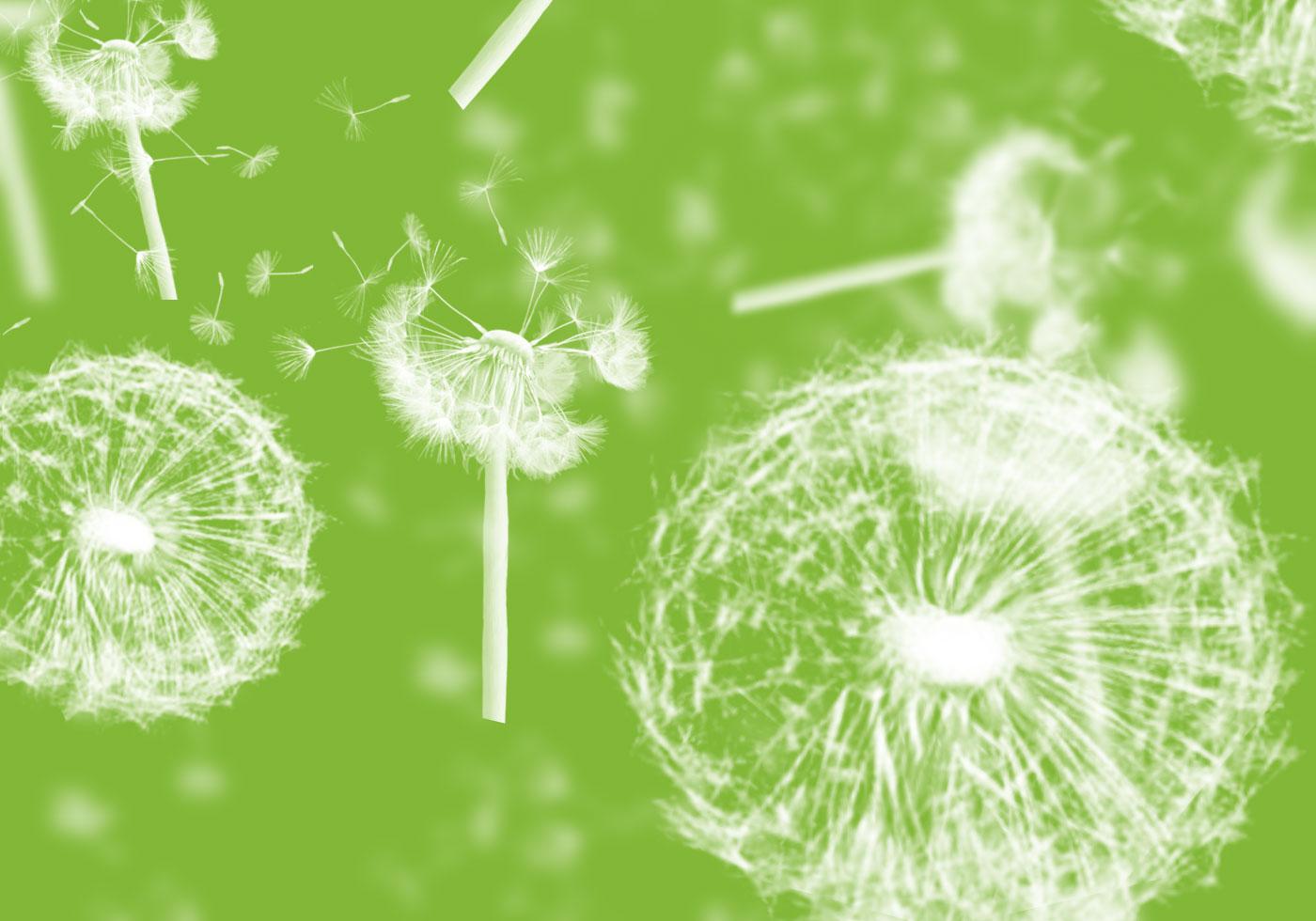 Dandelions-photoshop-brushes