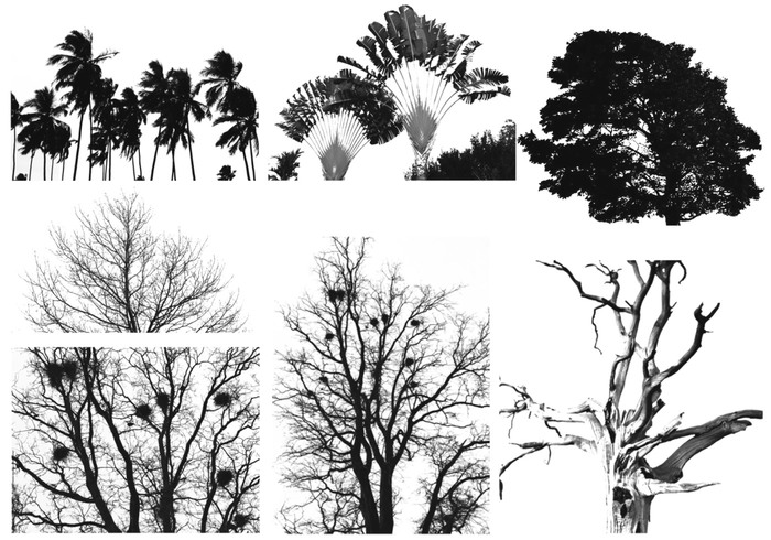 HI-RES trees