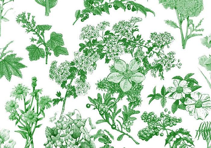 Escovas de flora 1