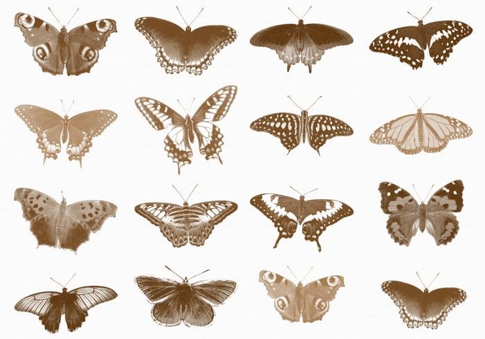 Cepillos de mariposa III