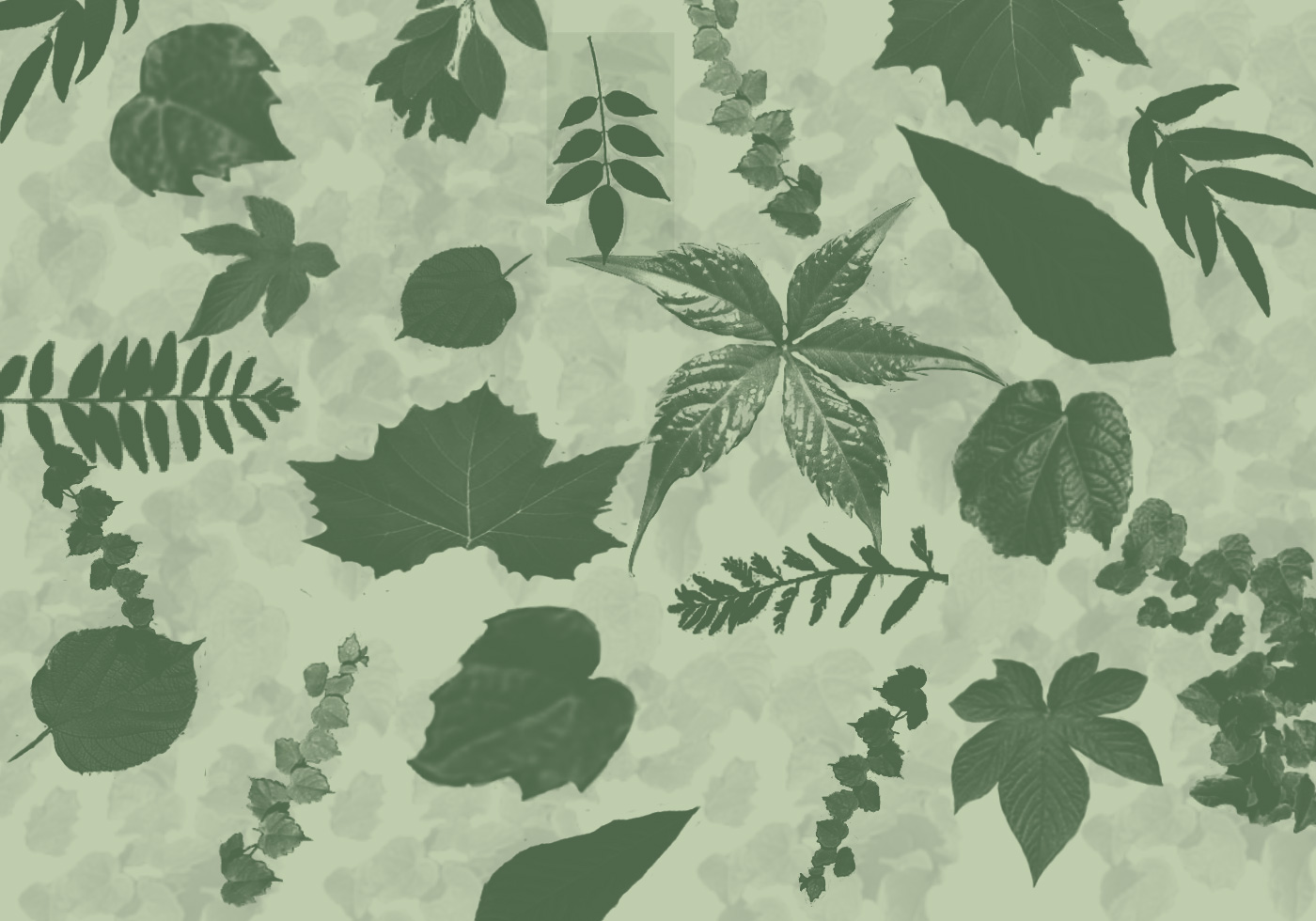 Leaves Photoshop Brushes Free Photoshop Brushes At