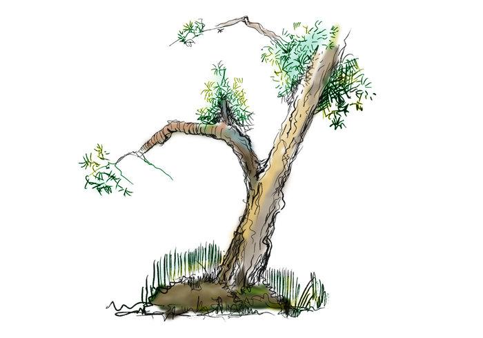 Gekritzelte Bäume