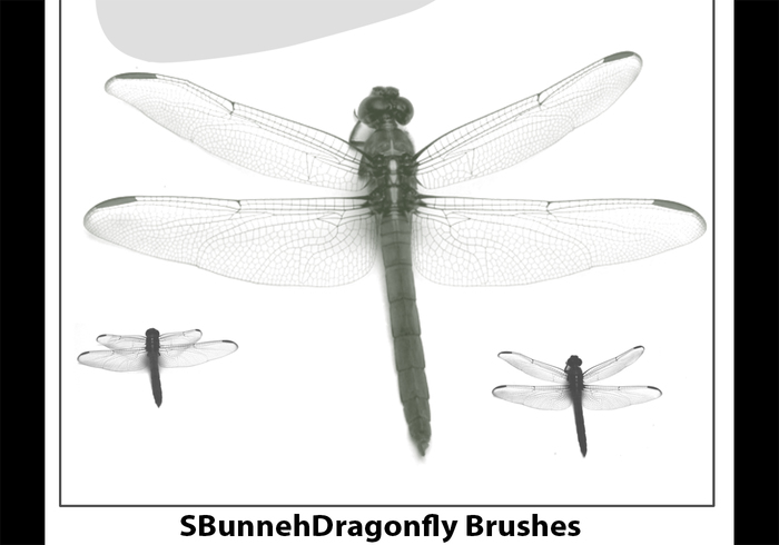Dragonfly Brush