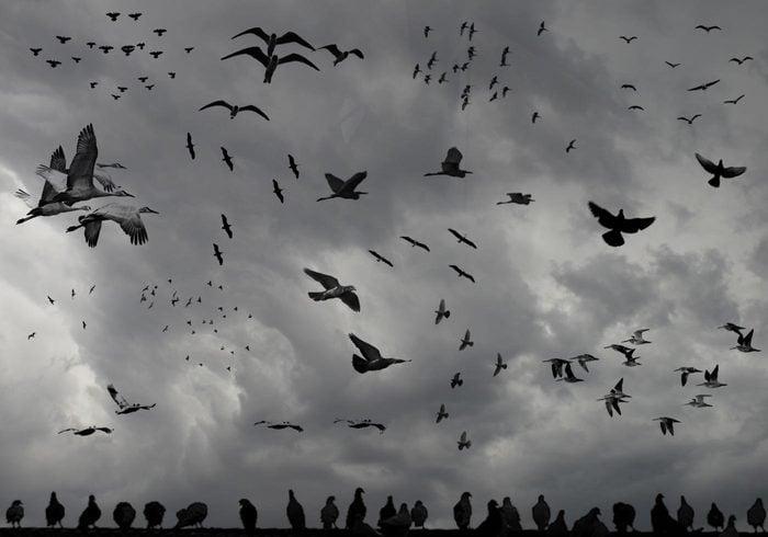 Fåglar av en fjäder