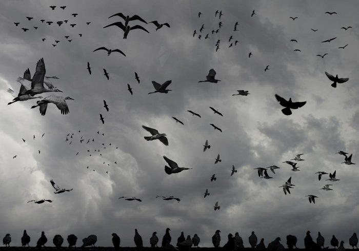 Vögel einer Feder