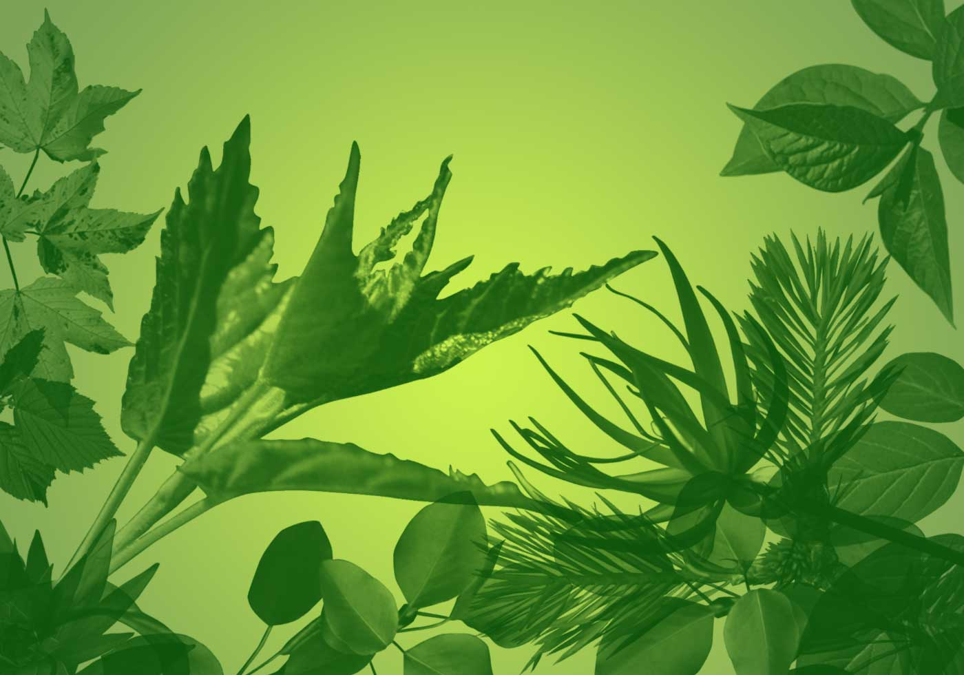 Vine Leaf Paint Brush Photoshop