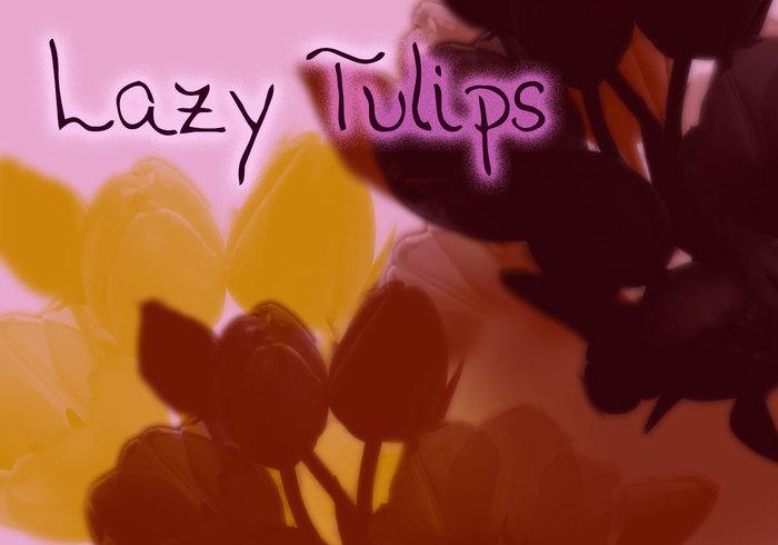 Tulipanes perezoso