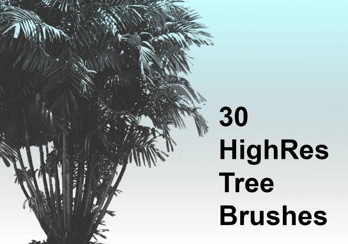 30 brosses d'arbres de haute qualité