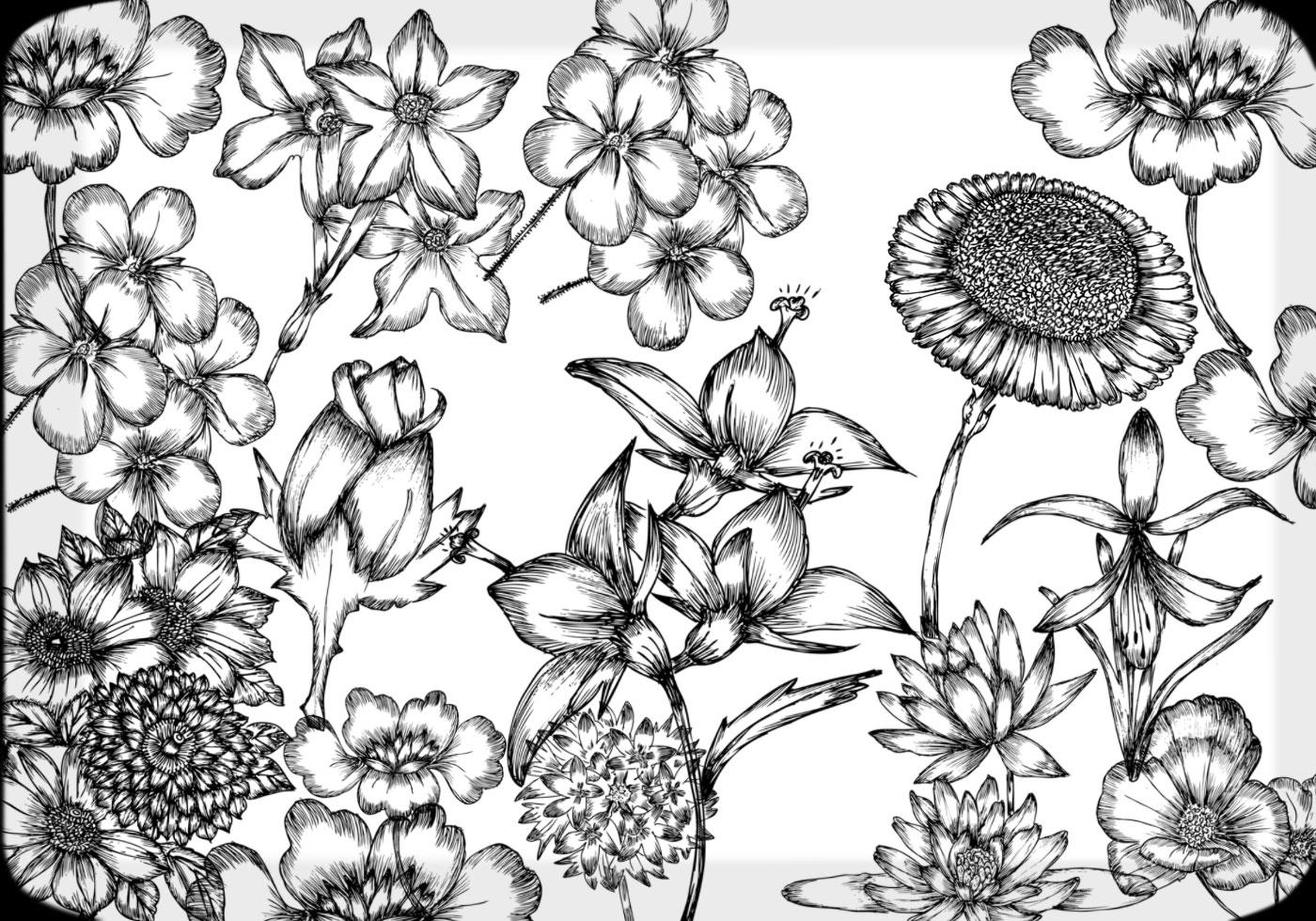 Hand Drawn Flowers Free Brush Pack Free Photoshop Brushes At