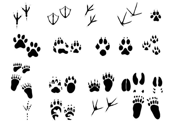 Amazing Animal Tracks Borstels