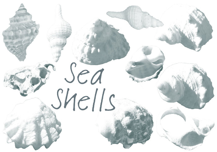 Red Sea Shells