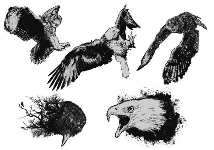 Vögel von Prey Brush Pack