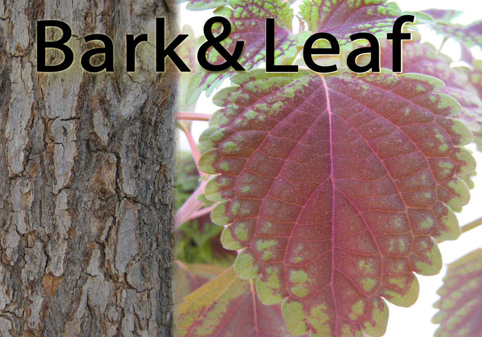 Bark & leaf
