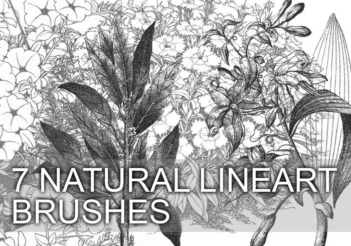 7 Brosses Natural Lineart