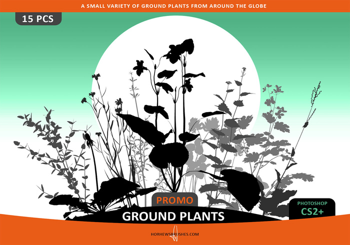 Ground Plants Selection