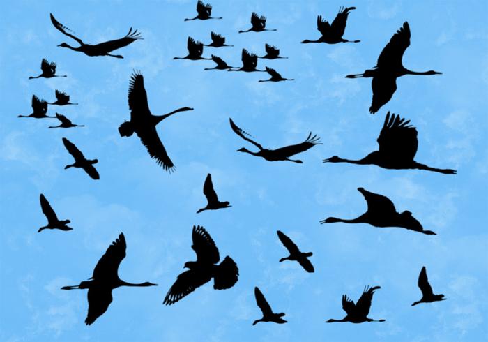 Vögel Pinsel