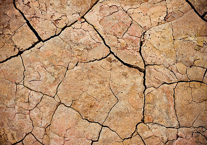 Cracked Mud Texture