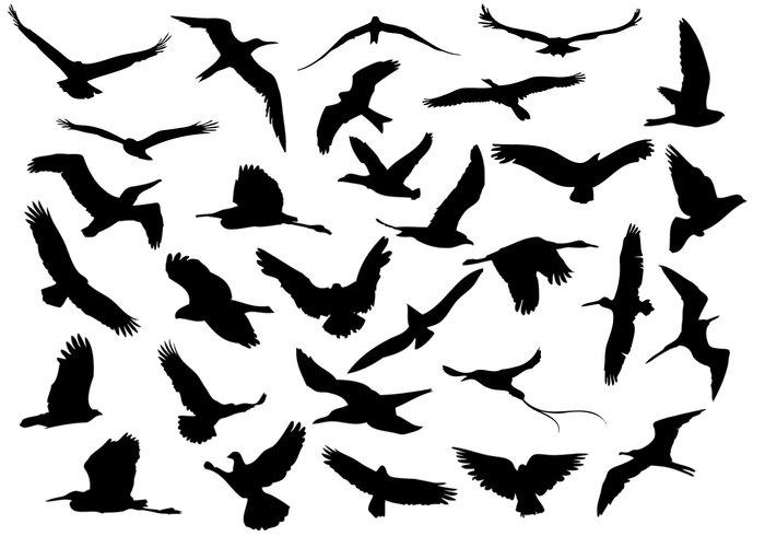 30 flygande fåglar