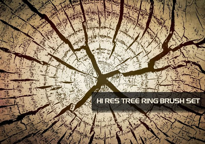 Hoch-Res Tree Ring Textur Pinsel für Photoshop