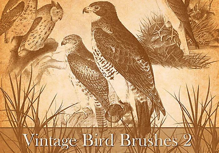 Cepillos del pájaro del vintage 2