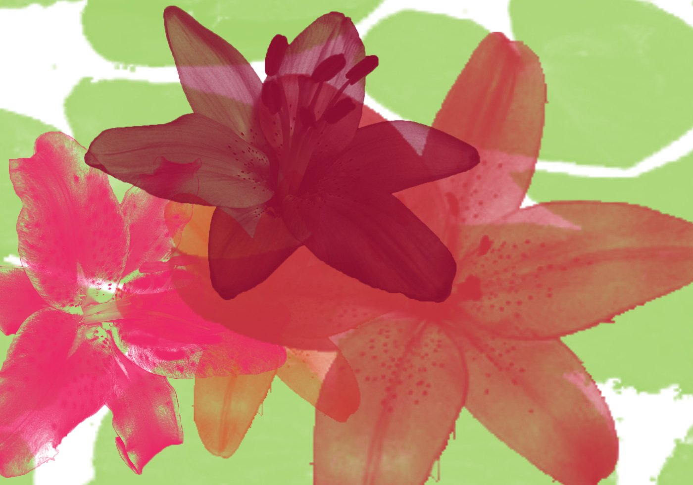 Free lily and water lily brushes izmirmasajfo