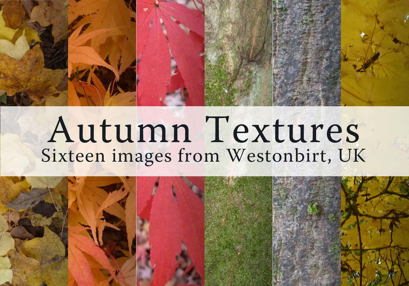 Free Cold Autumn Leaves Textures