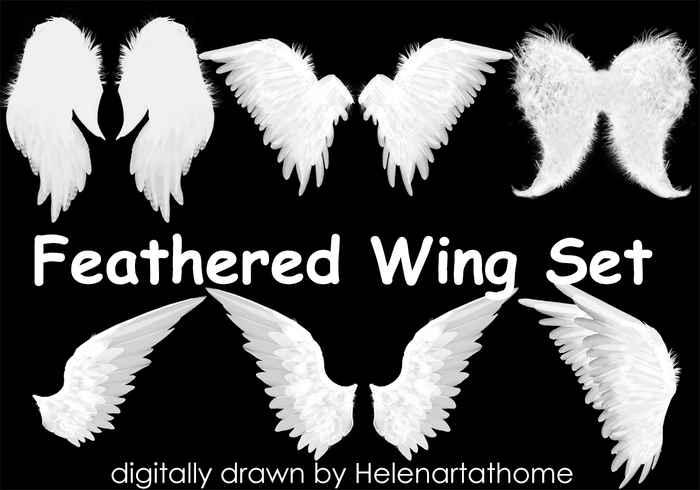 feathered wing set free photoshop brushes at brusheezy
