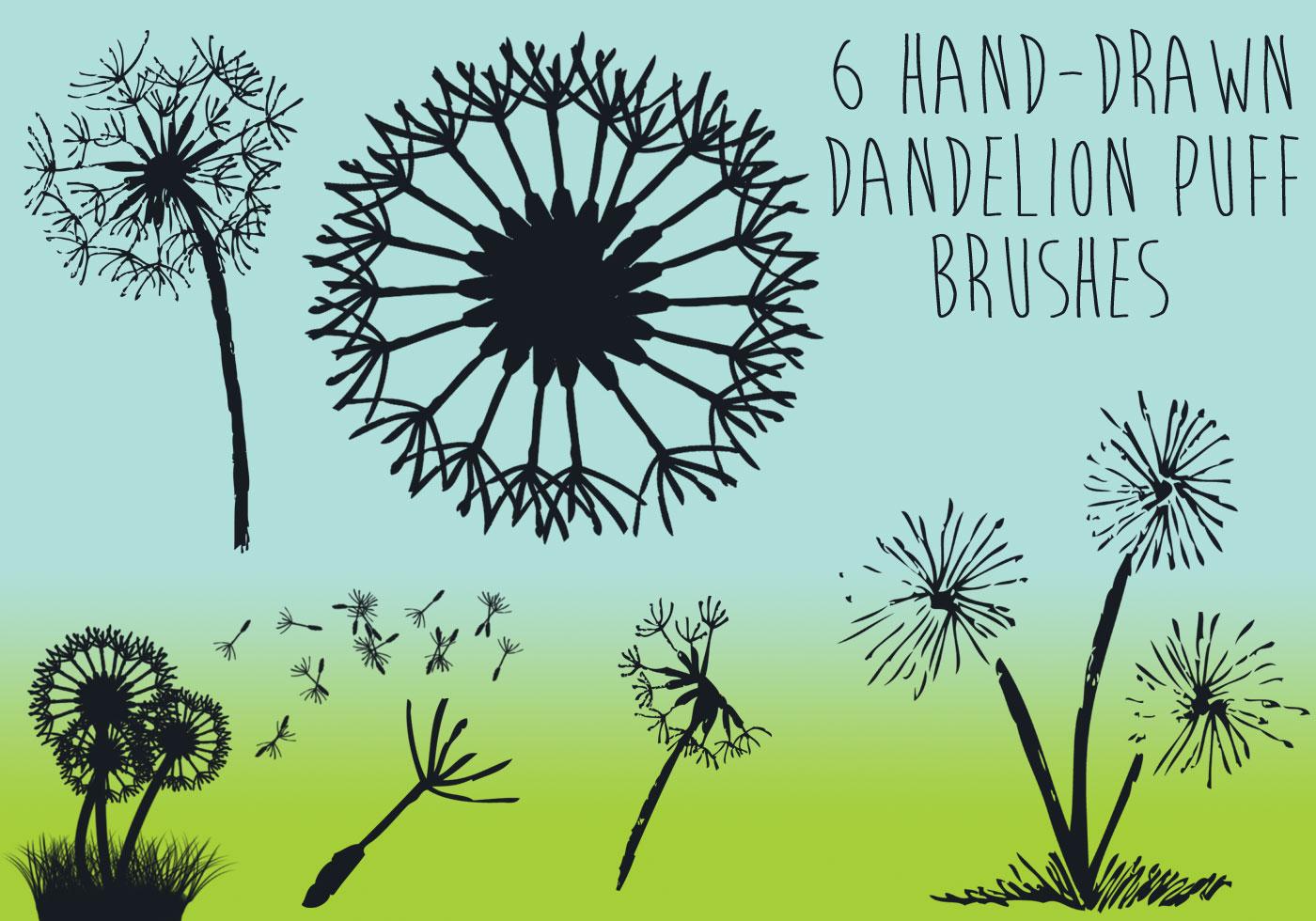 Dandelion Puff Brushes Free Photoshop Brushes At Brusheezy