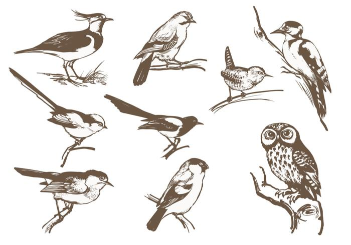 Etched Bird Brush Pack