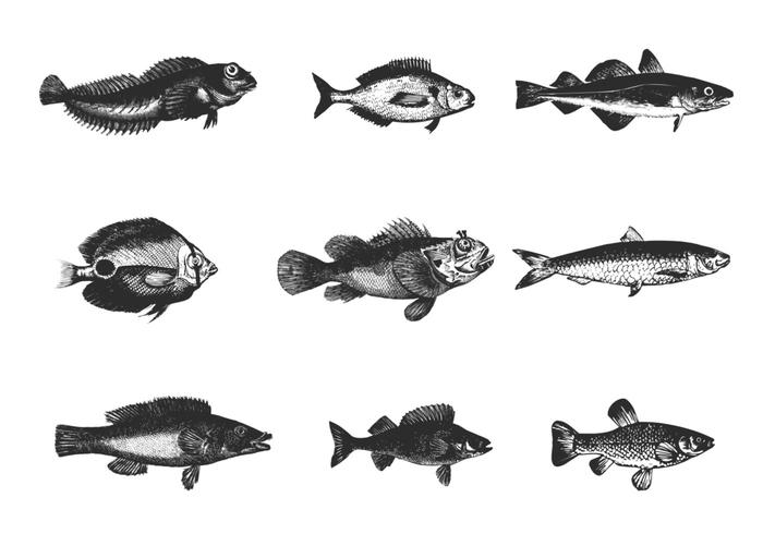 Etched Fish Brush Pack