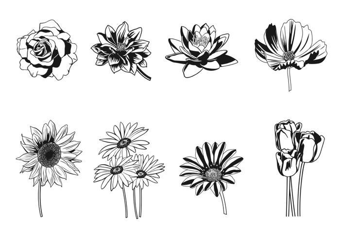 Schwarzweiss-Blumenbürsten-Satz