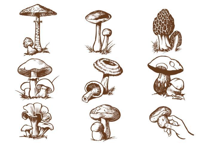 Pacote de escova de cogumelo desenhado à mão