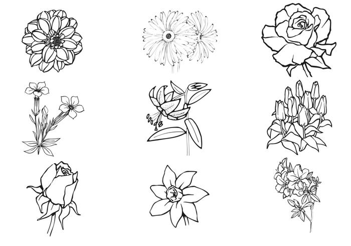 Conjunto de escova de flores desenhadas à mão