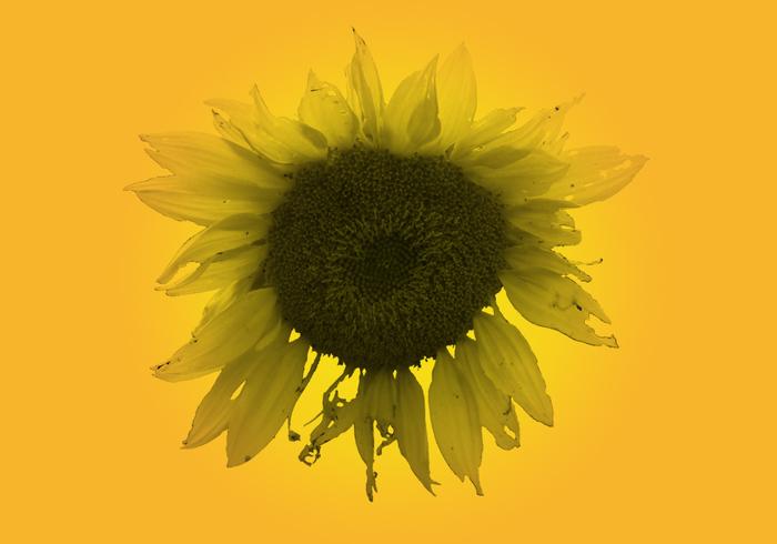 Große SunFlower Pinsel