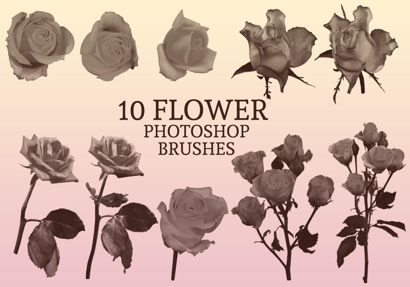 Flower Photoshop Brushes Free Photoshop Brushes At Brusheezy